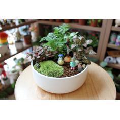 创意绿植盆栽 苔藓微景观植物组合盆景 办公室盆景生日礼物礼品